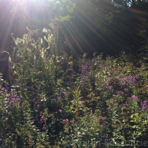 What We Can Learn from the Autumn Garden